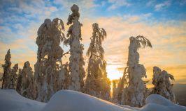 Погода в Лапландии зимой: успейте увидеть настощую зиму, пока она еще существует