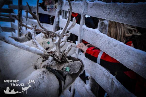 Поездка на оленью ферму, катание на оленьих упряжках