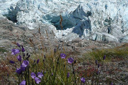 Летний круиз к фьордам и ледникам Гренландии