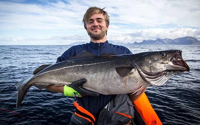 Рыбалка на Лофотенских островах 3