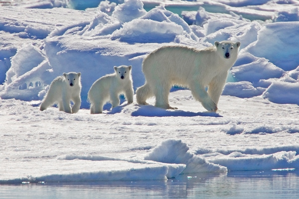 Круїз по Шпіцбергену та полярні ведмеді